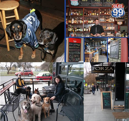 Dogs watching Seahawks at Olde 99. And a crowd on Forza Coffee Co's patio. Credit Jenny DeRaspe-Bolles