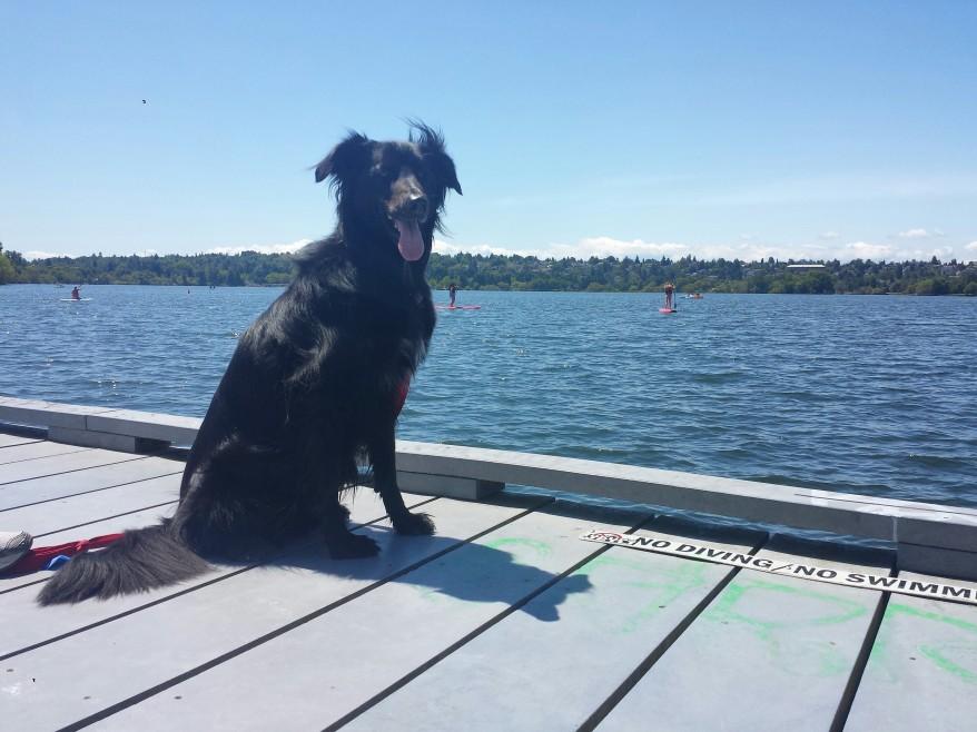 charlie dog of green lake