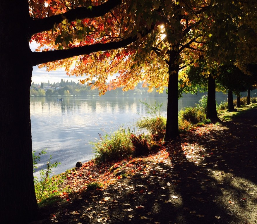 Greenlake Morning by Trent Mitchell