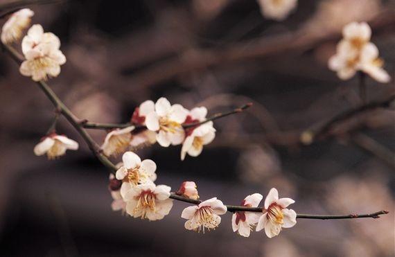 Flower-Petals