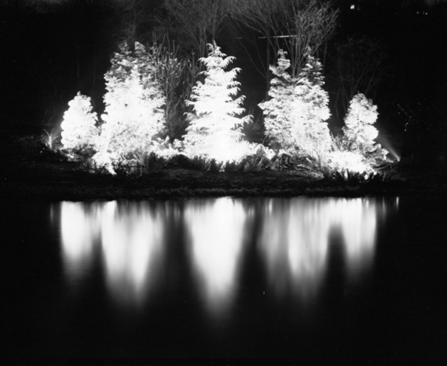 Christmas Tree Lightinhg