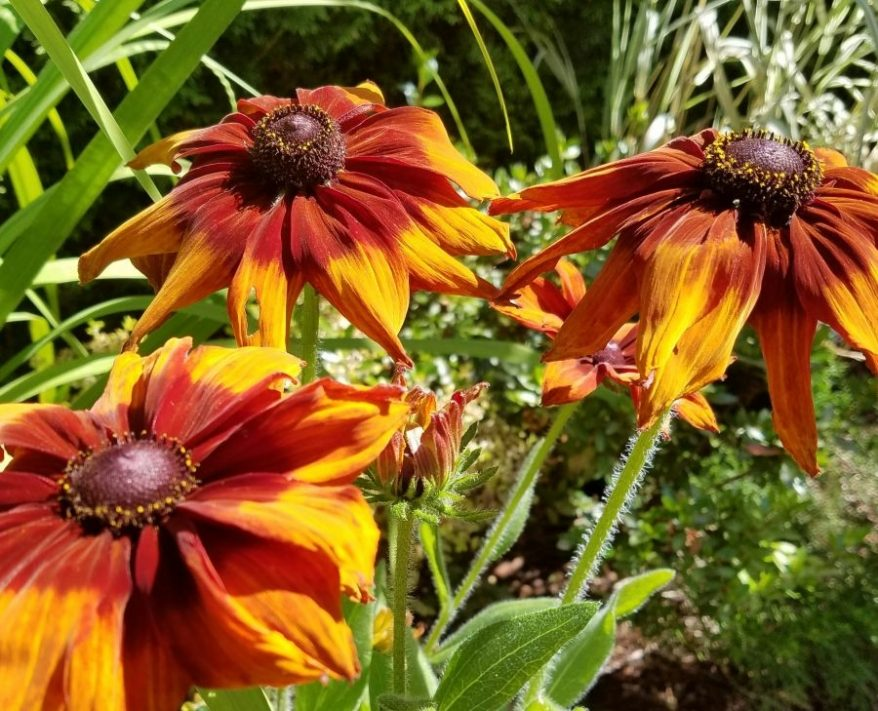Seattle Greenlaker King County Master Gardener Plant Sale And Garden Market May 5 6 News